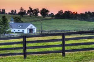 Horse Farm in Ocala